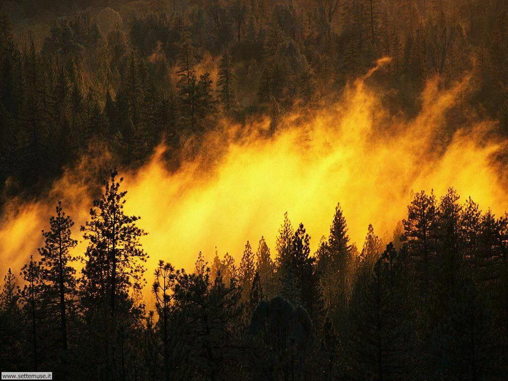Foto desktop di boschi e foreste 018