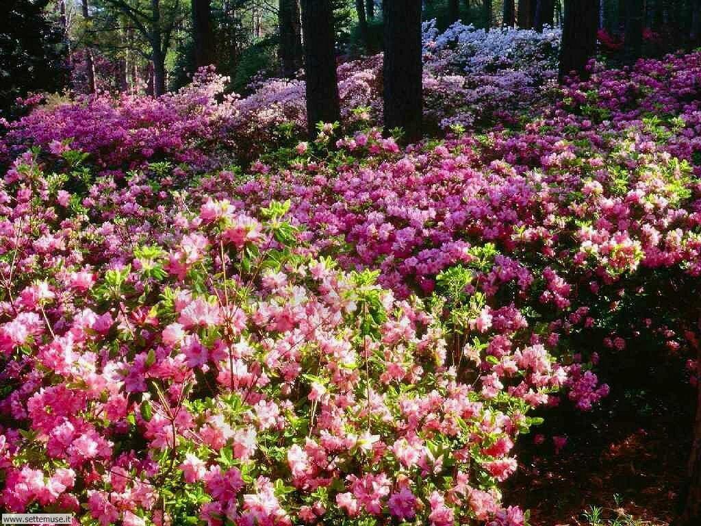 Foto desktop di boschi e foreste 019