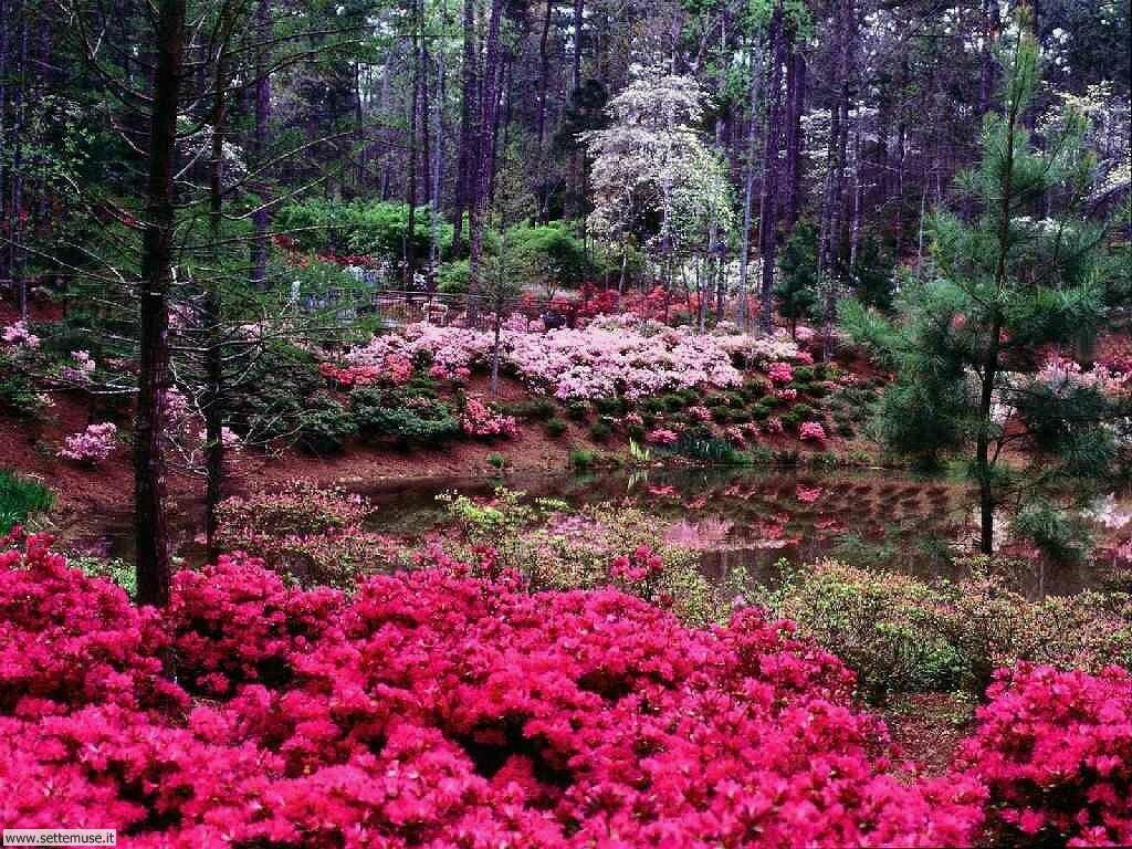 Foto desktop di boschi e foreste 020