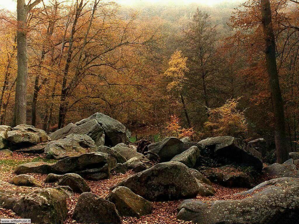 Foto desktop di boschi e foreste 021