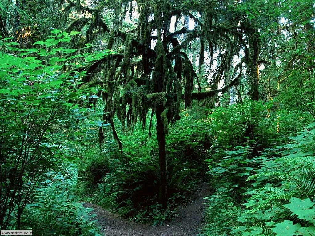 Foto desktop di boschi e foreste 022