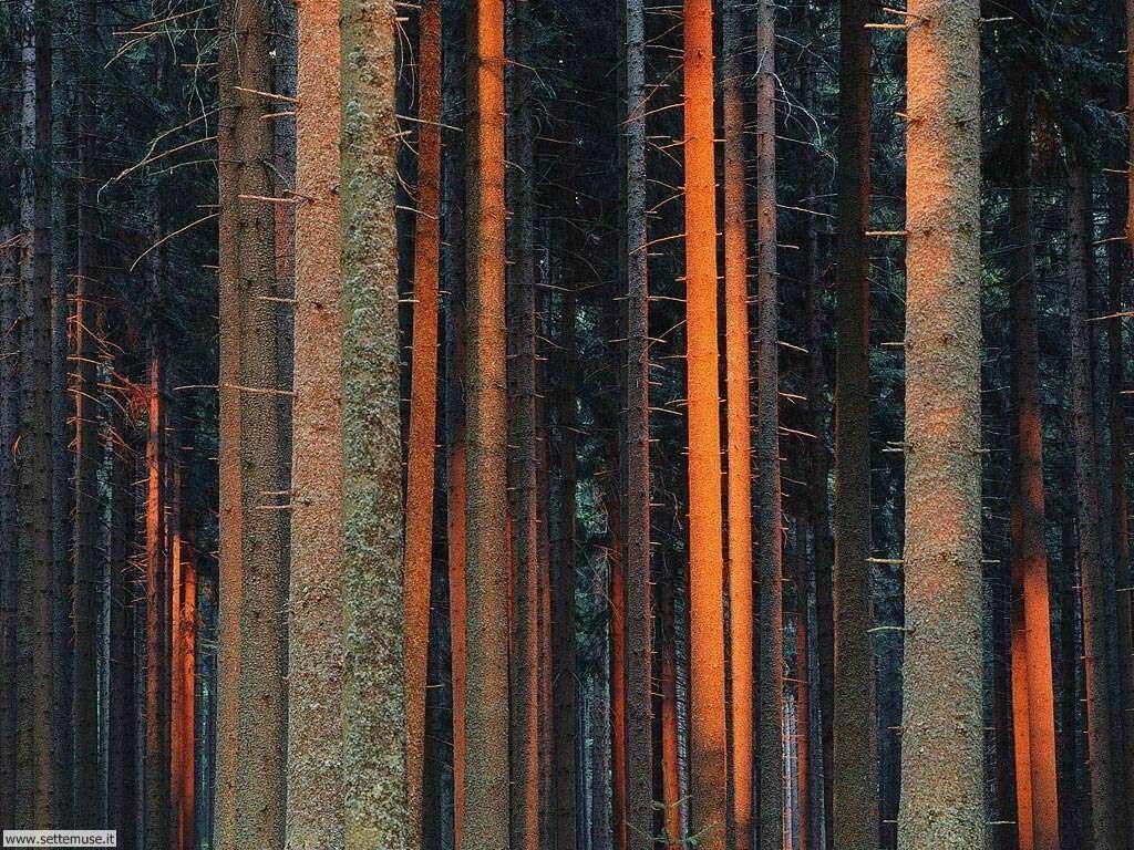 Foto desktop di boschi e foreste 023