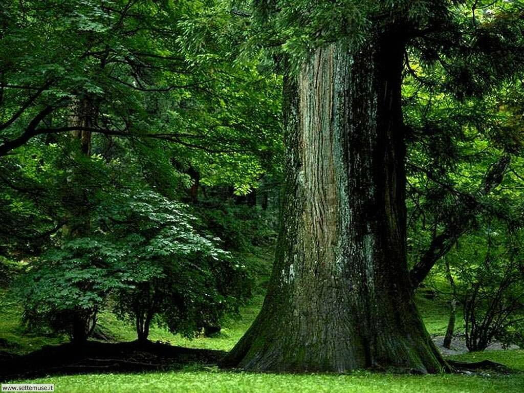 Foto desktop di boschi e foreste 024
