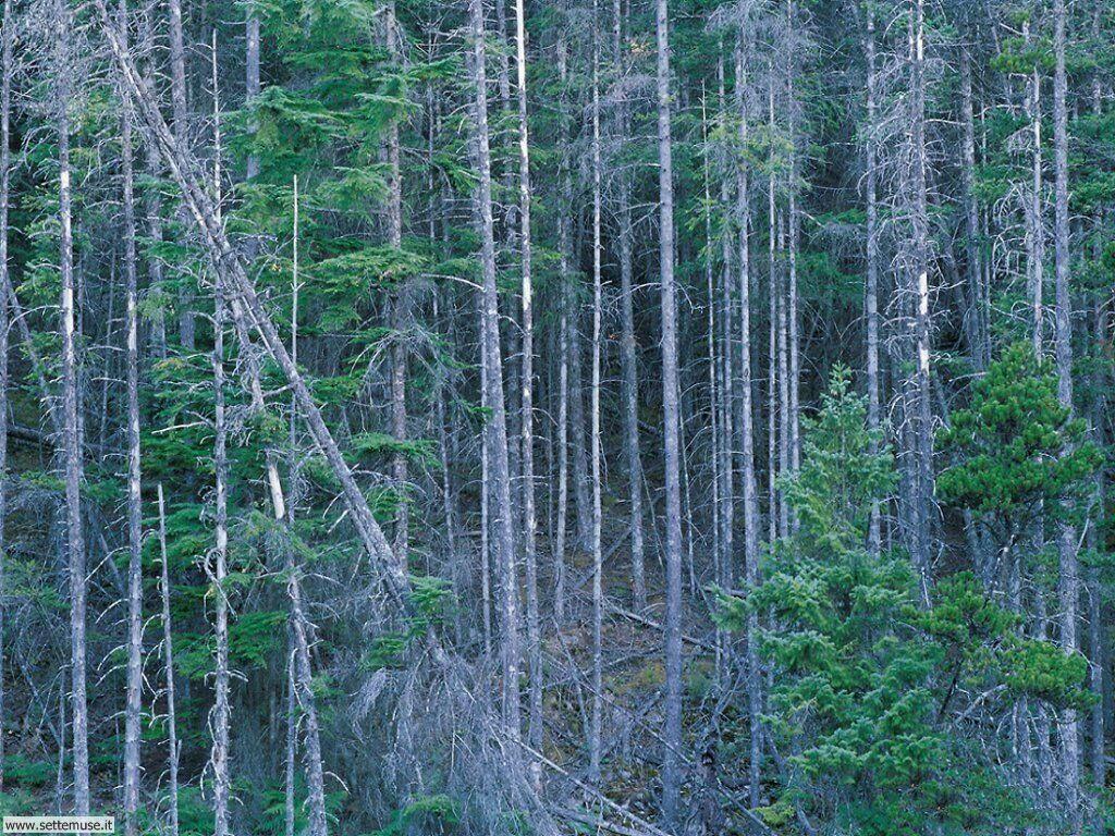 Foto desktop di boschi e foreste 026