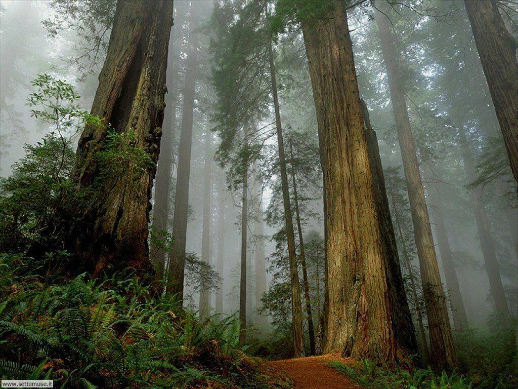 Foto desktop di boschi e foreste 027