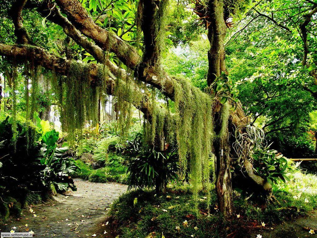 Foto desktop di boschi e foreste 028