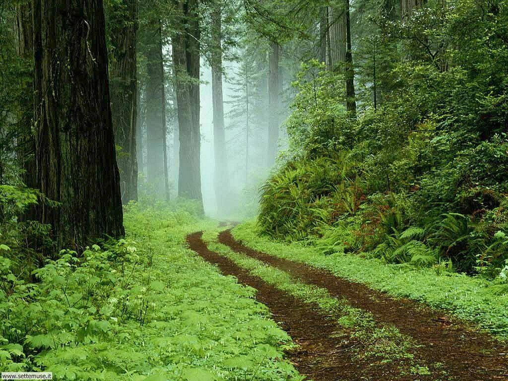 Foto desktop di boschi e foreste 029