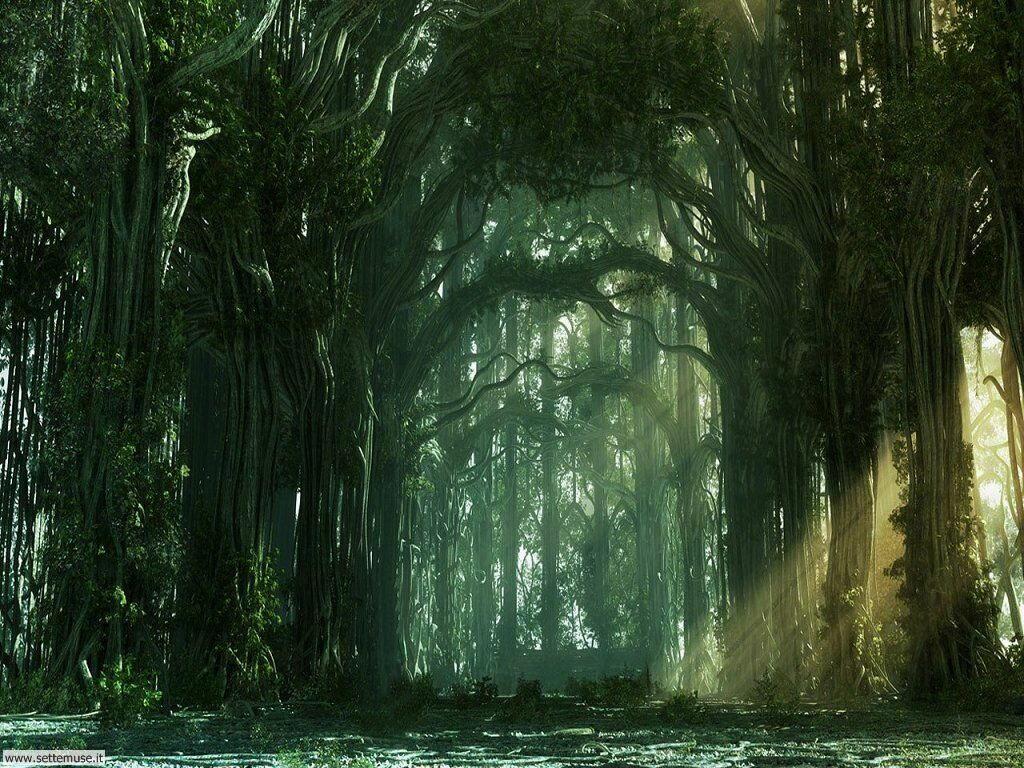 Foto desktop di boschi e foreste 030