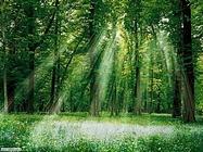 Foto desktop di boschi e foreste_032