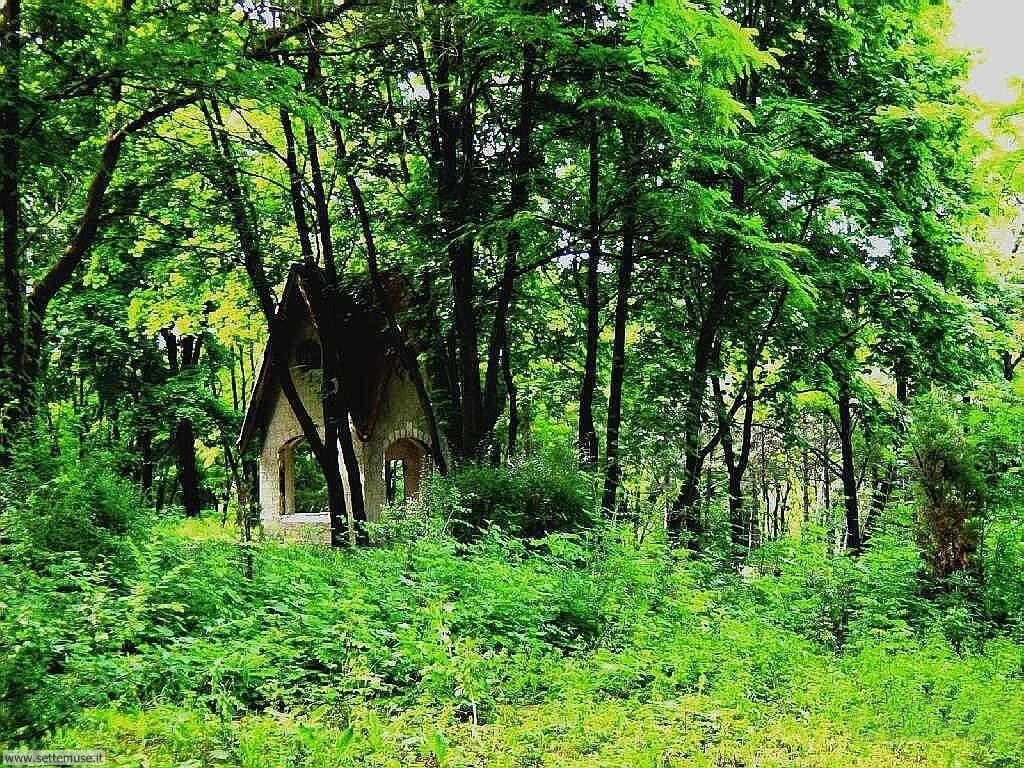 Foto desktop di boschi e foreste 033