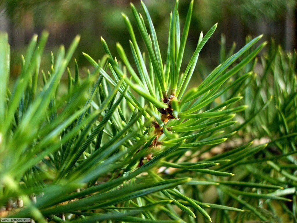 Foto desktop di boschi e foreste 034