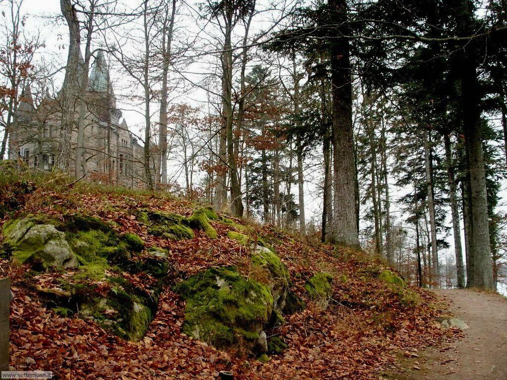Foto desktop di boschi e foreste 035