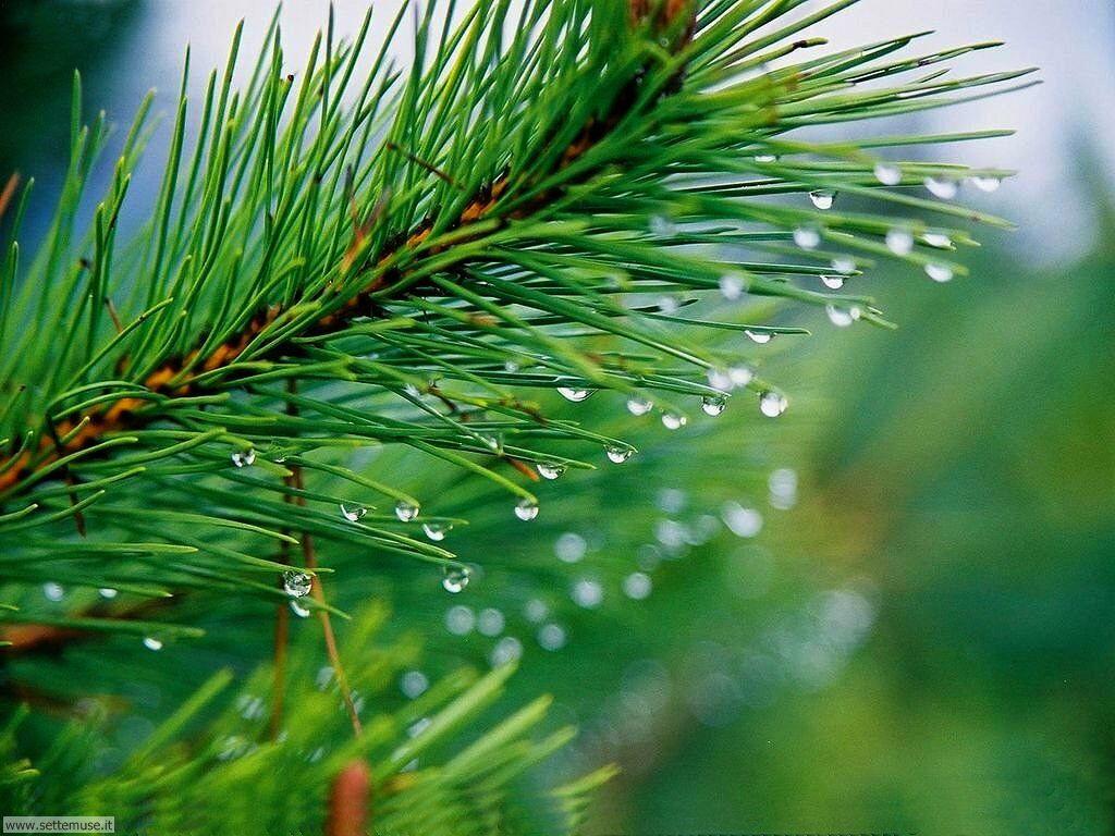 Foto desktop di boschi e foreste 036