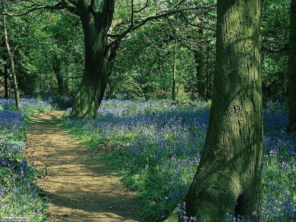Foto desktop di boschi e foreste 037