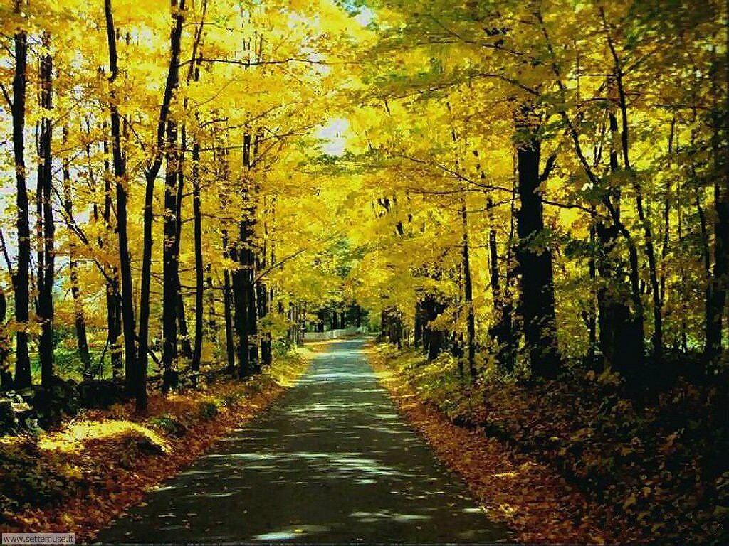 Foto desktop di boschi e foreste 039