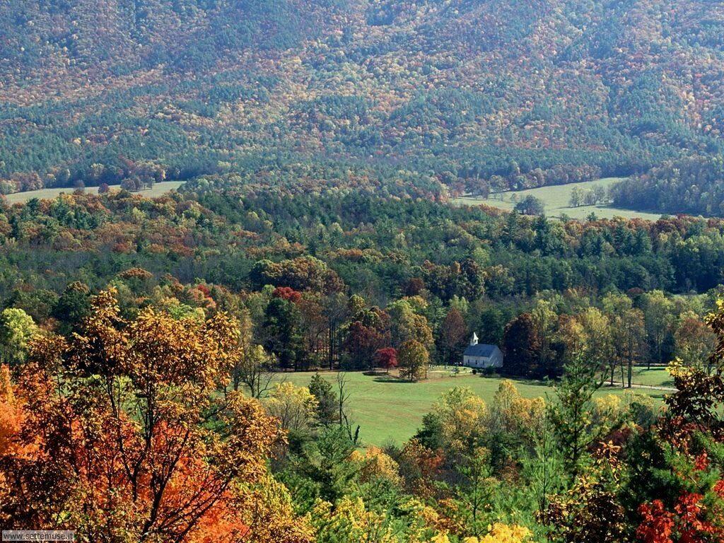 Foto desktop di boschi e foreste 040