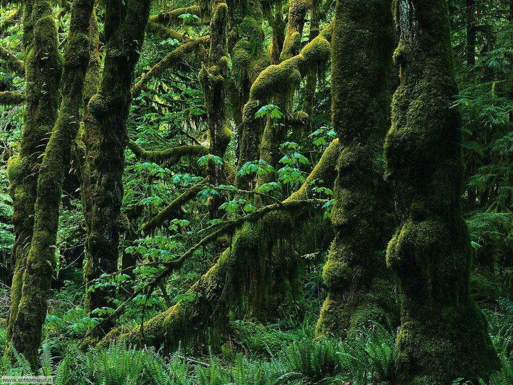 Foto desktop di boschi e foreste 041