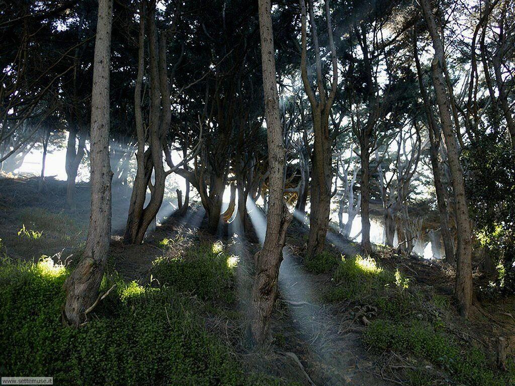 Foto desktop di boschi e foreste 043