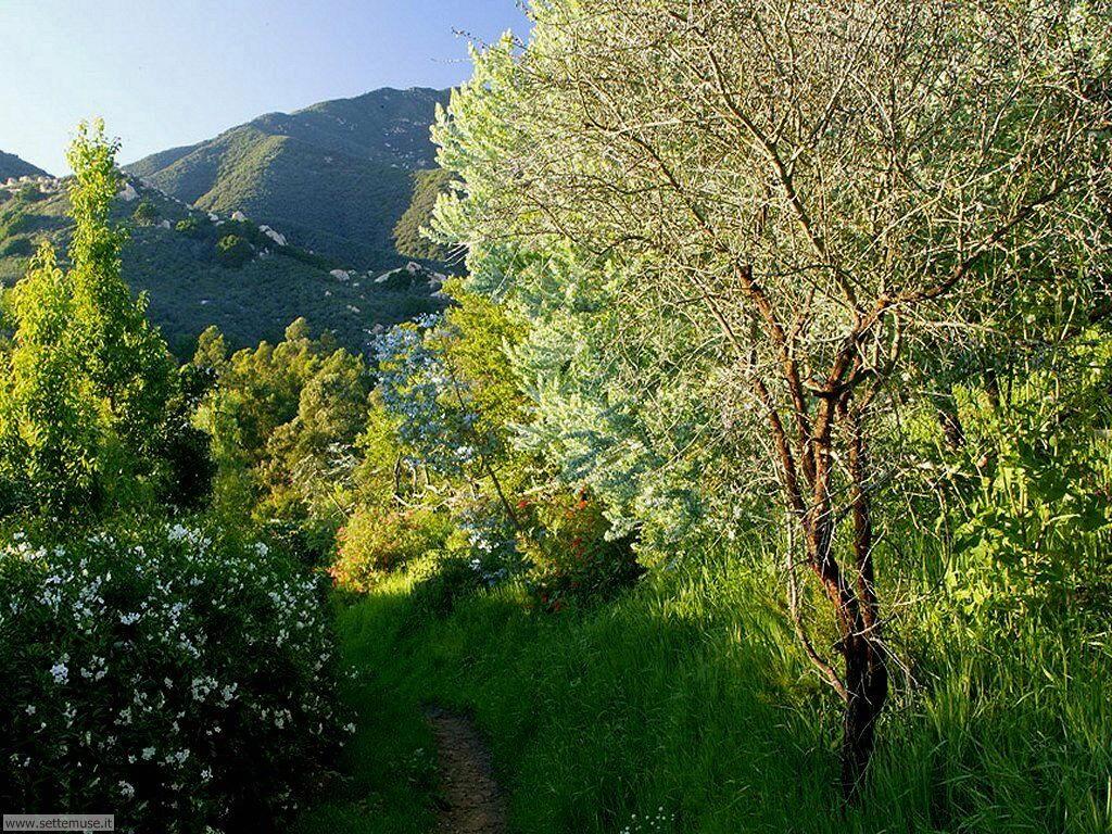 Foto desktop di boschi e foreste 045