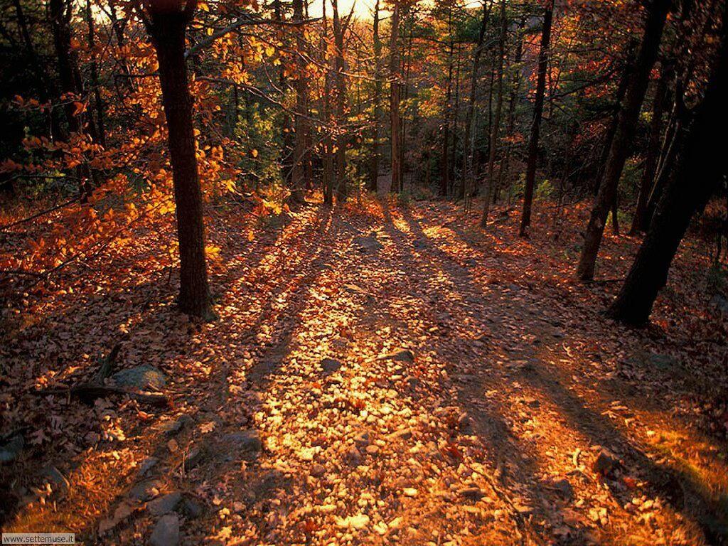 Foto desktop di boschi e foreste 046