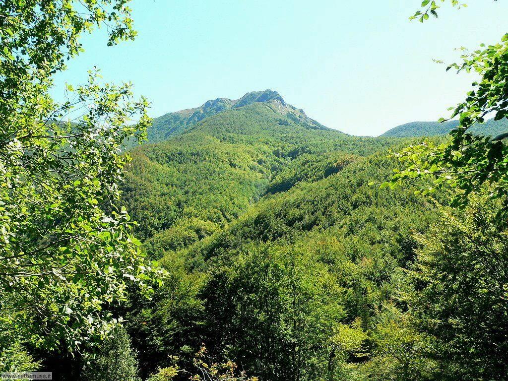 Foto desktop di boschi e foreste 047