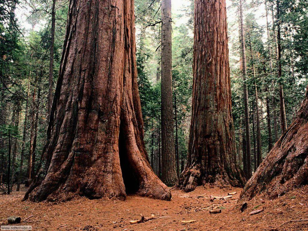 Foto desktop di boschi e foreste 050