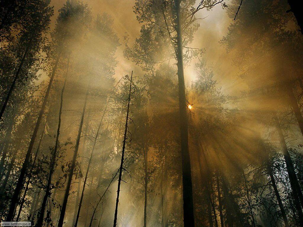 Foto desktop di boschi e foreste 052