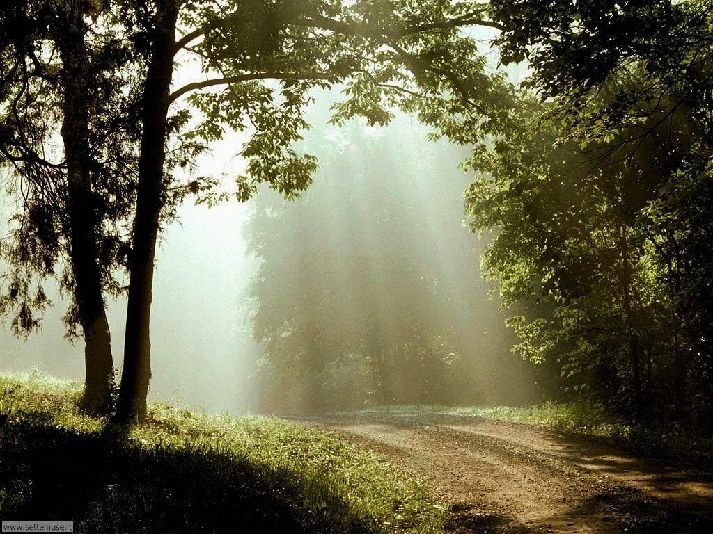 Foto desktop di boschi e foreste 053