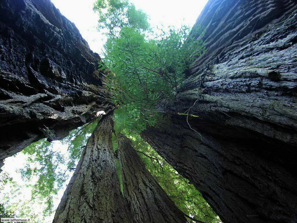 Foto desktop di boschi e foreste 055