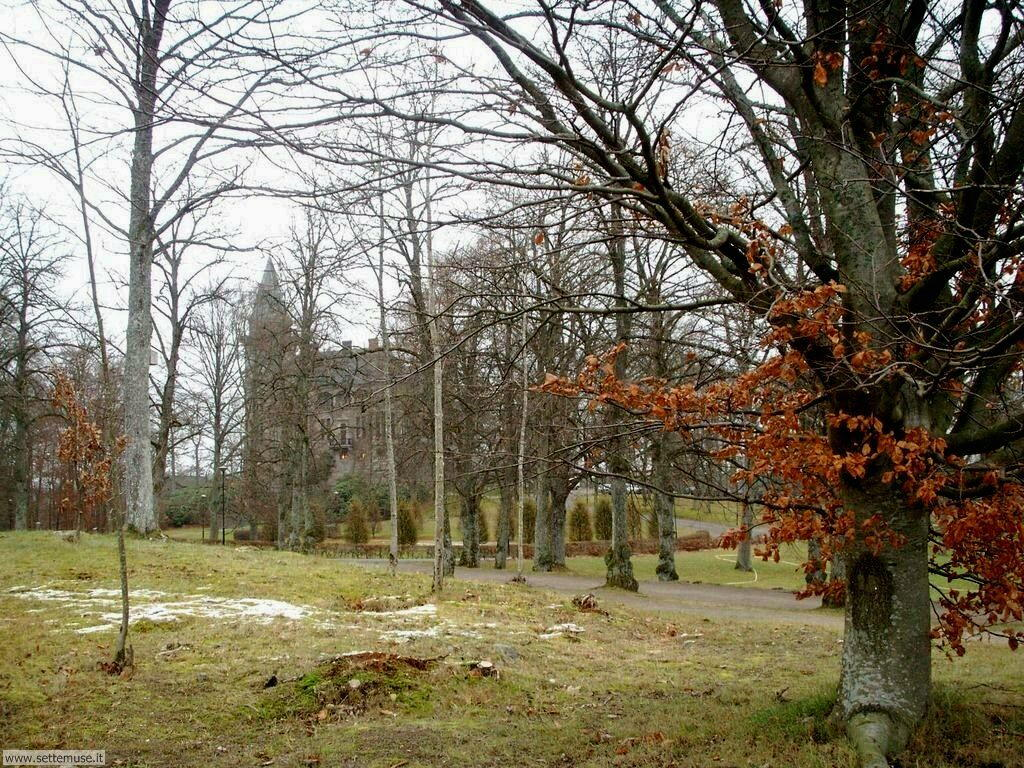 Foto desktop di boschi e foreste 056