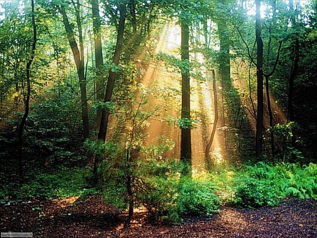 Foto desktop di boschi e foreste 057