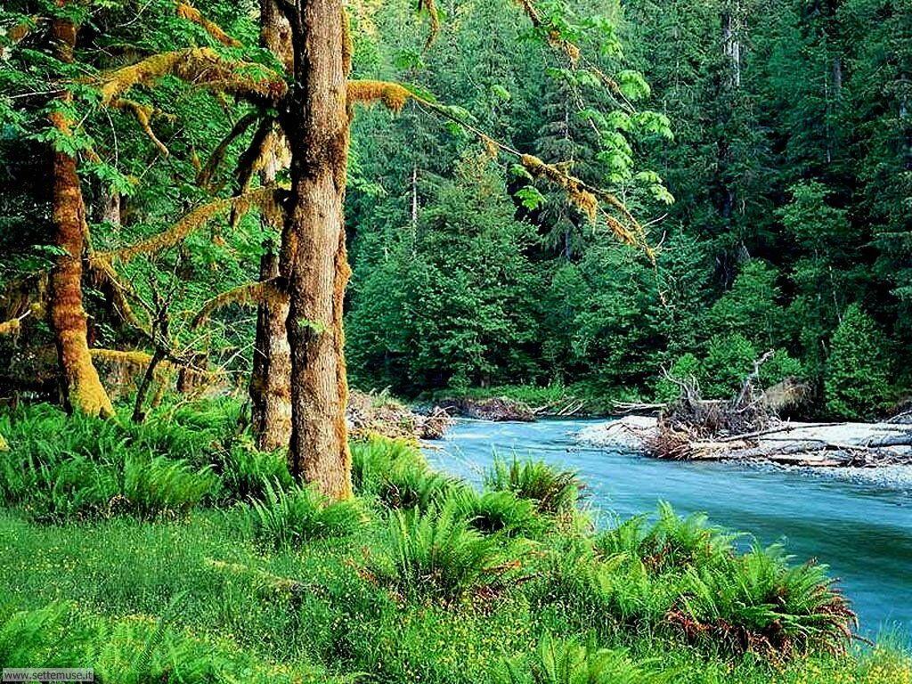 Foto desktop di boschi e foreste 059