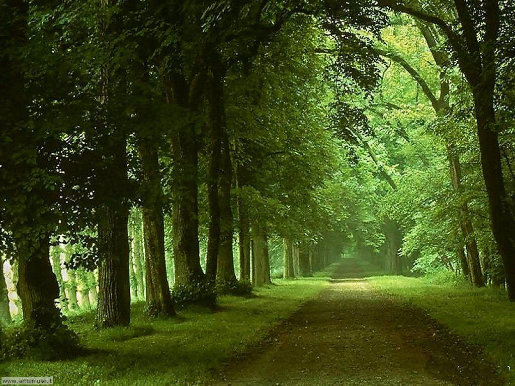 Foto desktop di boschi e foreste 060