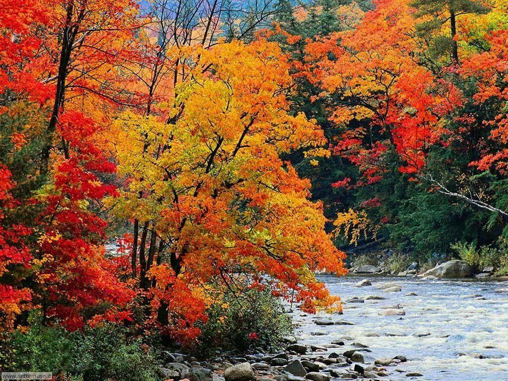 Foto desktop di boschi e foreste 061