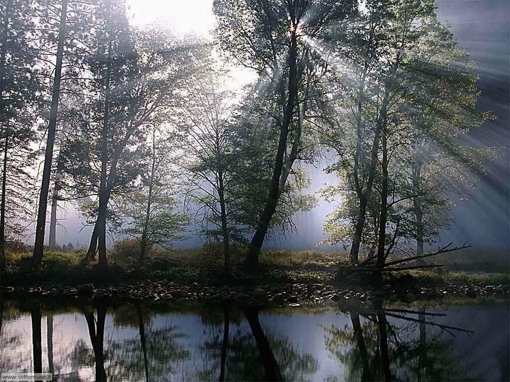 Foto desktop di boschi e foreste 063