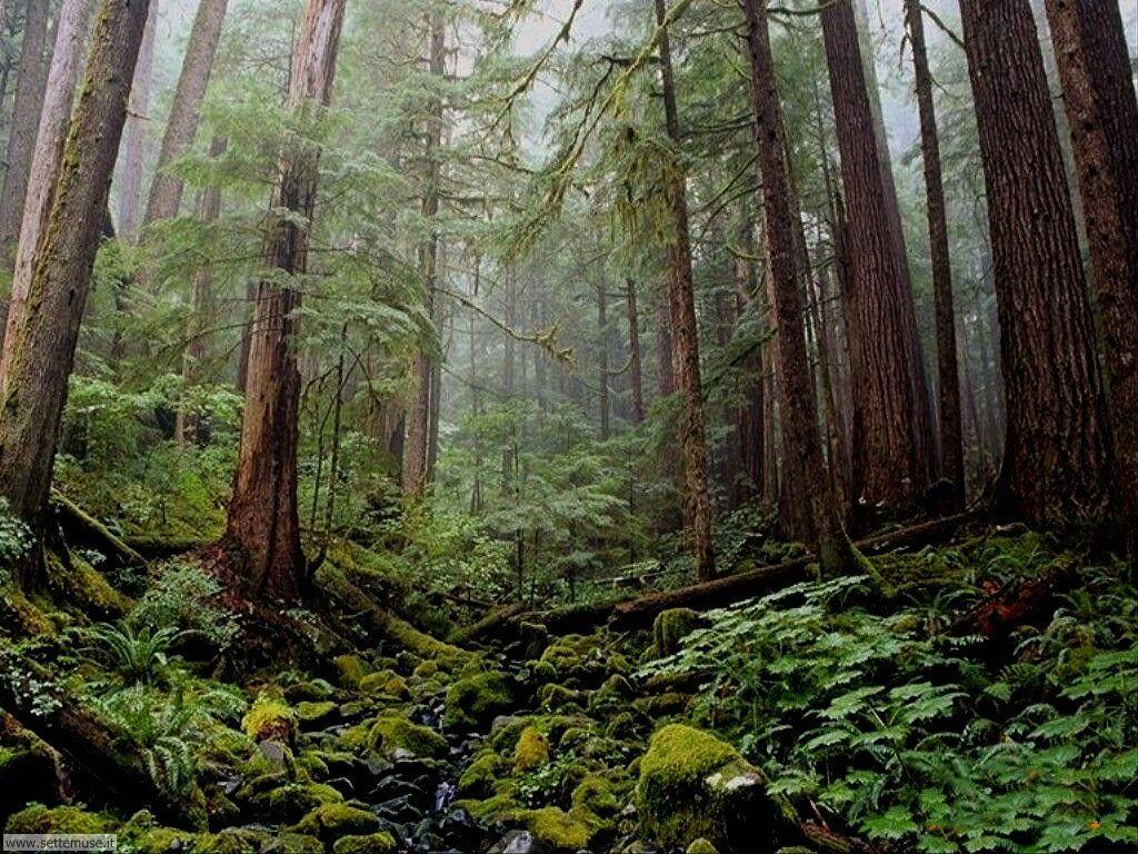 Foto desktop di boschi e foreste 064