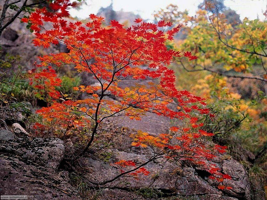 Foto desktop di boschi e foreste 065