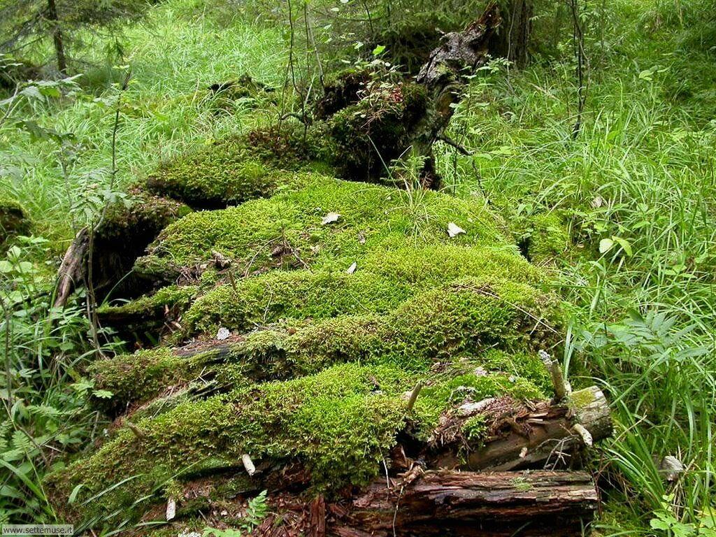 Foto desktop di boschi e foreste 067
