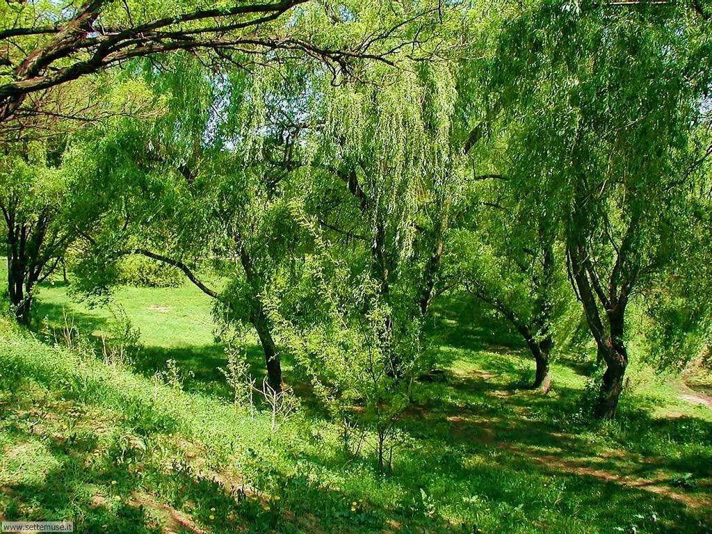 Foto desktop di boschi e foreste 069