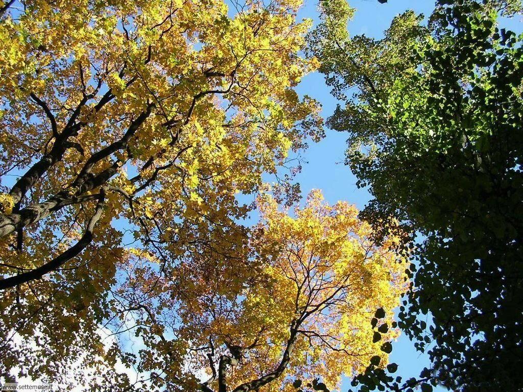 Foto desktop di boschi e foreste 071