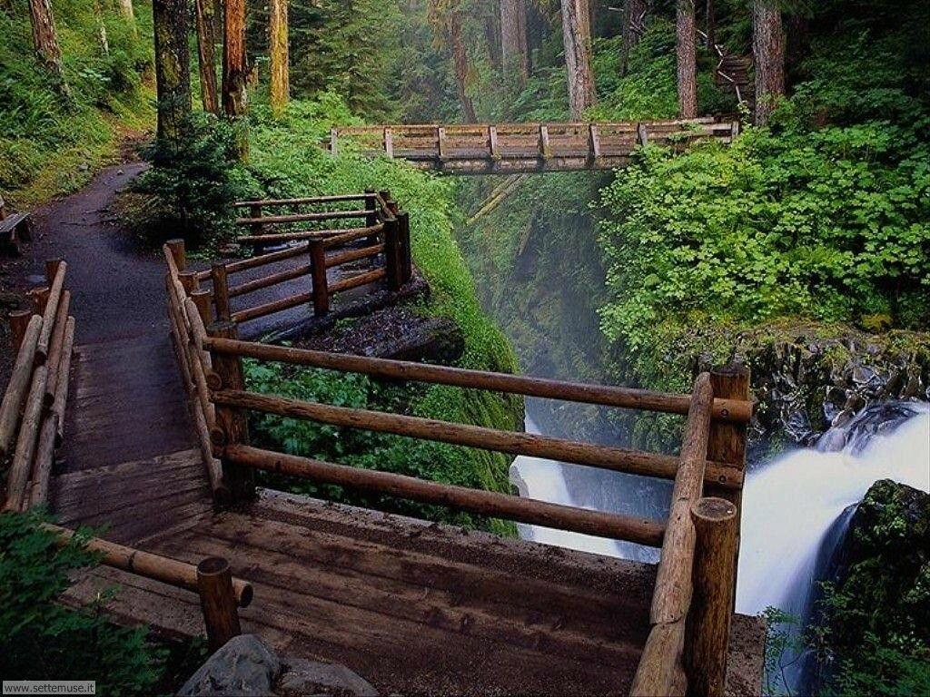 Foto desktop di boschi e foreste 072