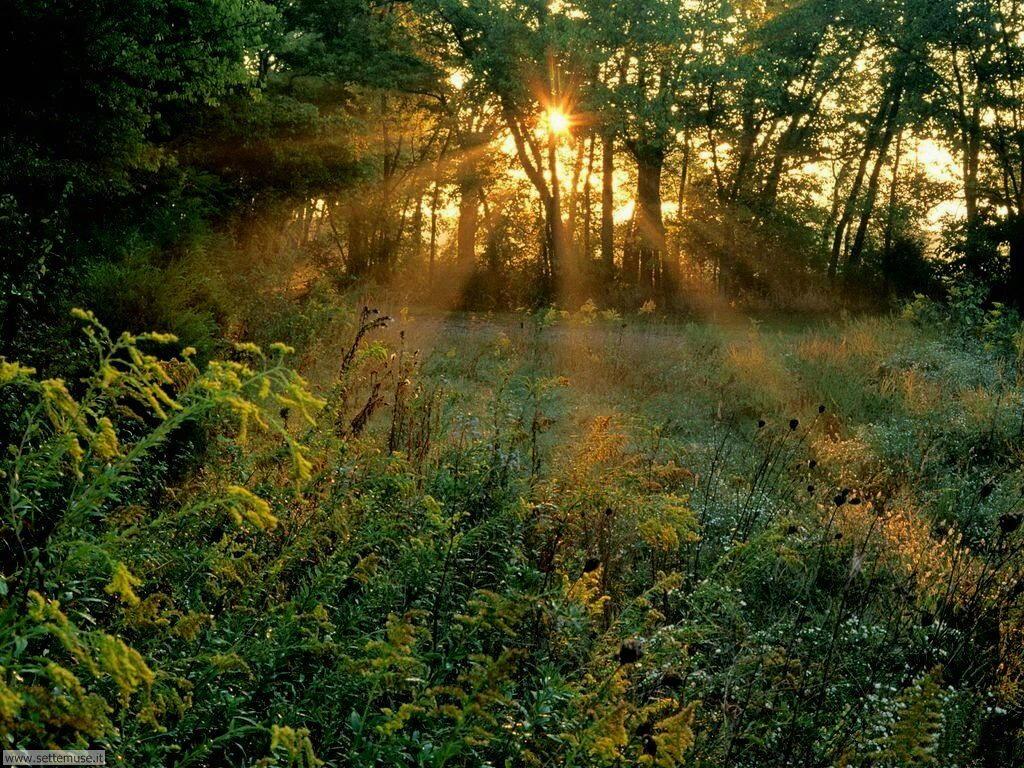 Foto desktop di boschi e foreste 074