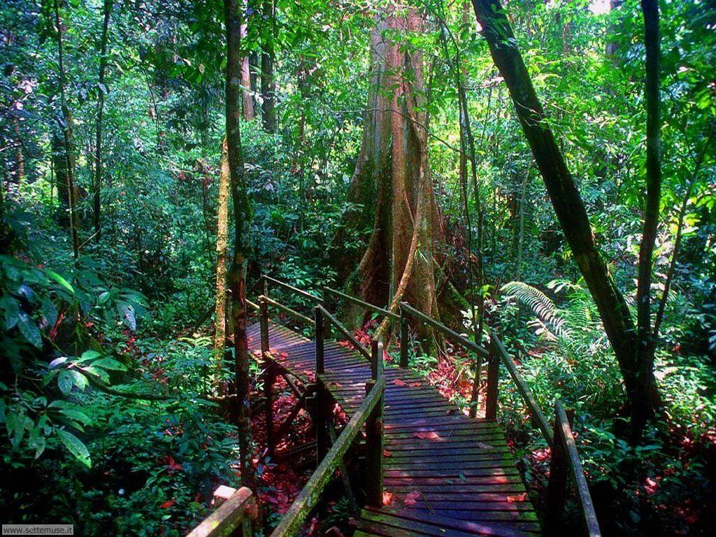 Foto desktop di boschi e foreste 076