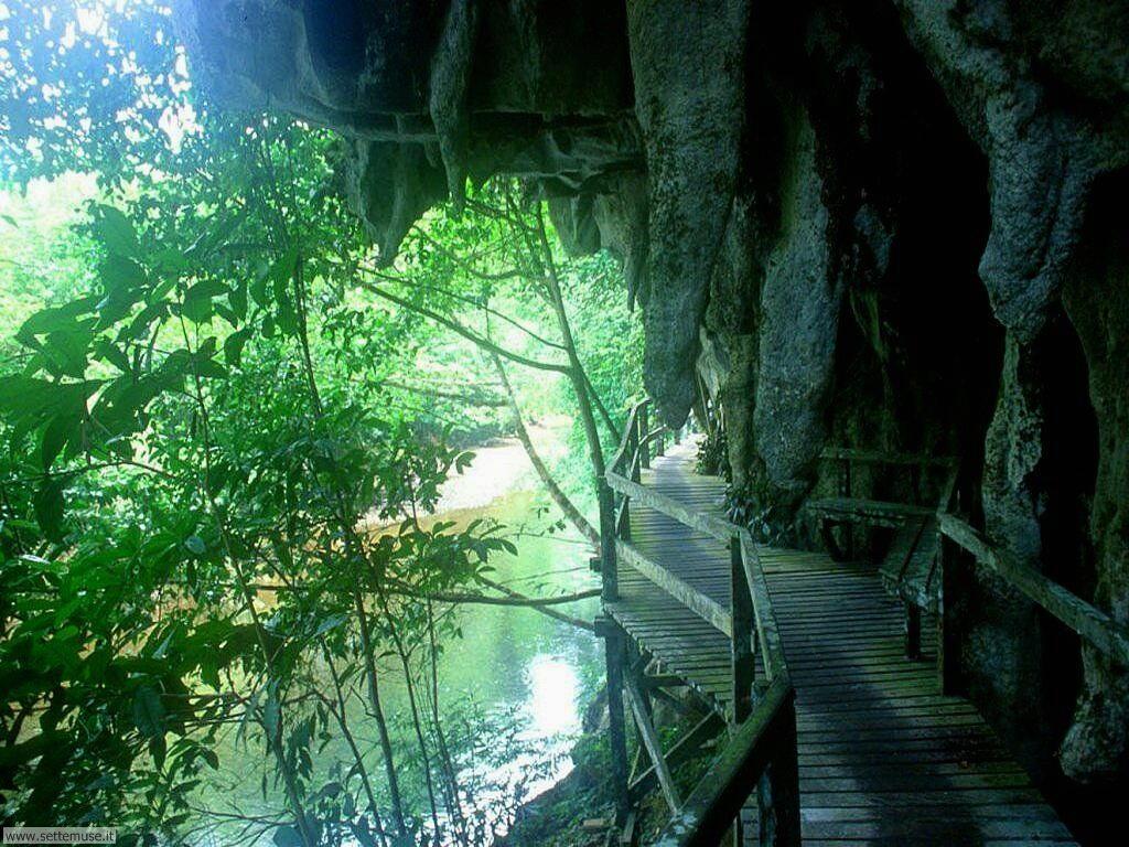 Foto desktop di boschi e foreste 077