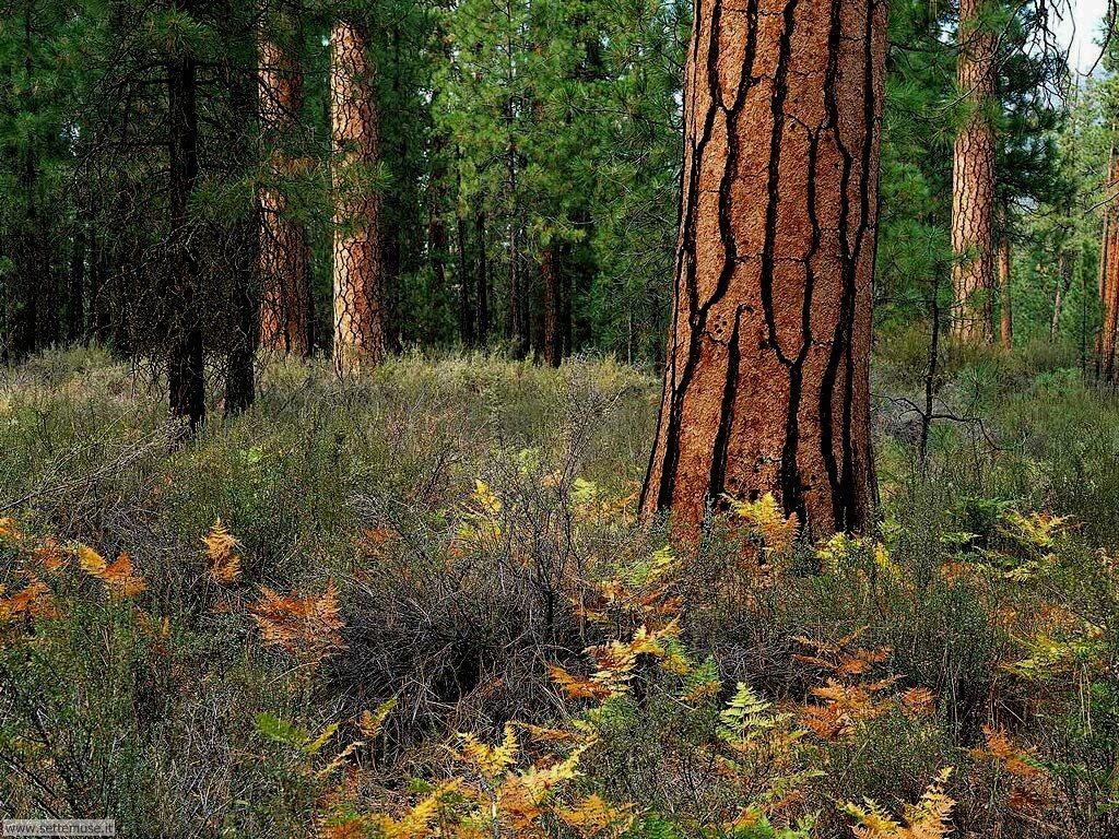 Foto desktop di boschi e foreste 078