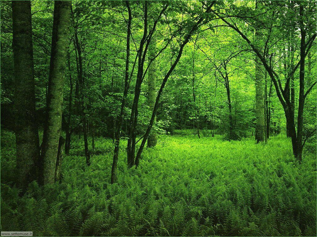 Foto desktop di boschi e foreste 079