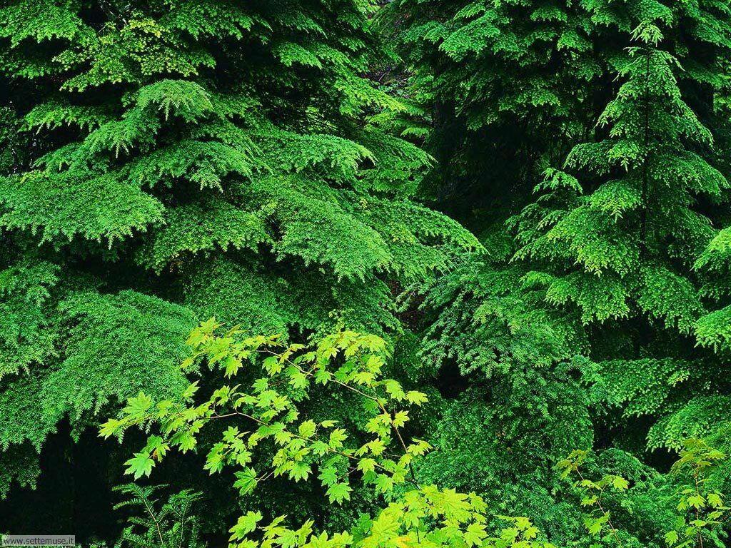 Foto desktop di boschi e foreste 080
