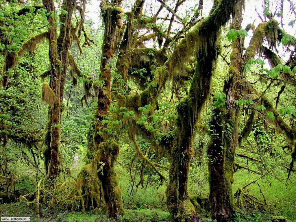 Foto desktop di boschi e foreste 081
