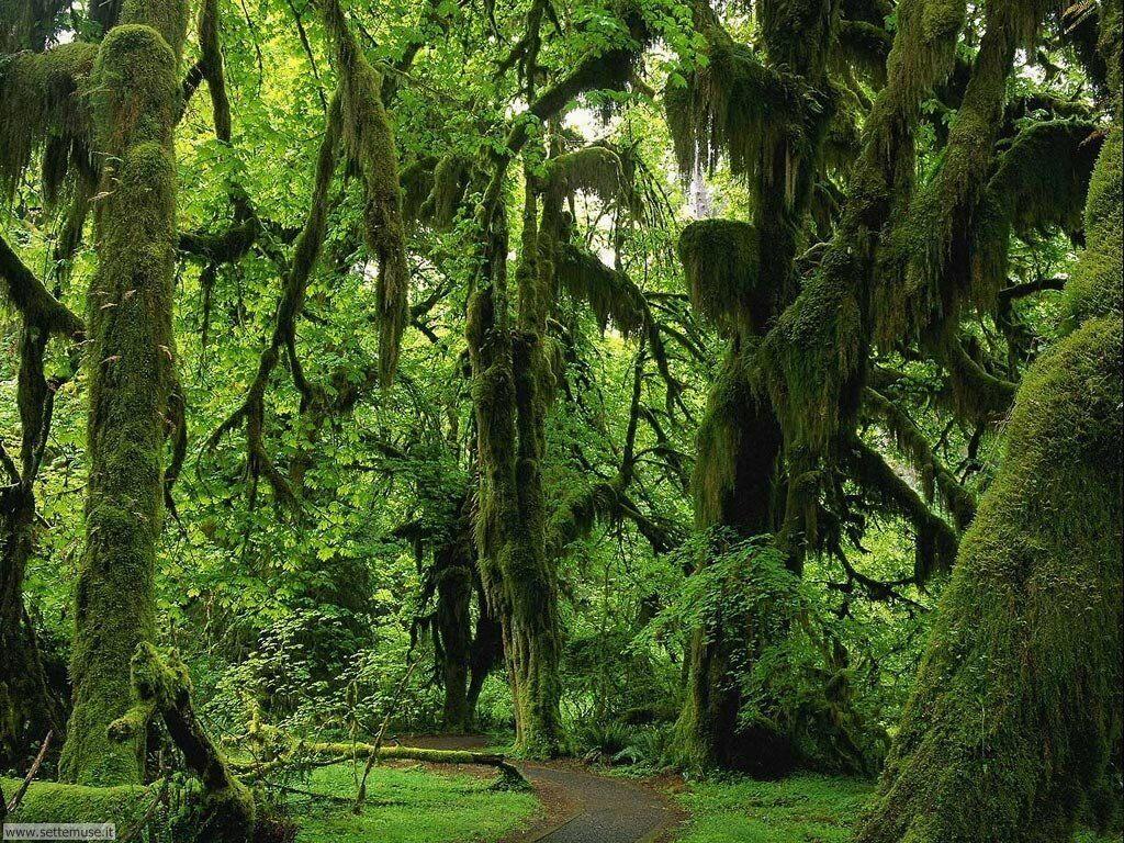 Foto desktop di boschi e foreste 082