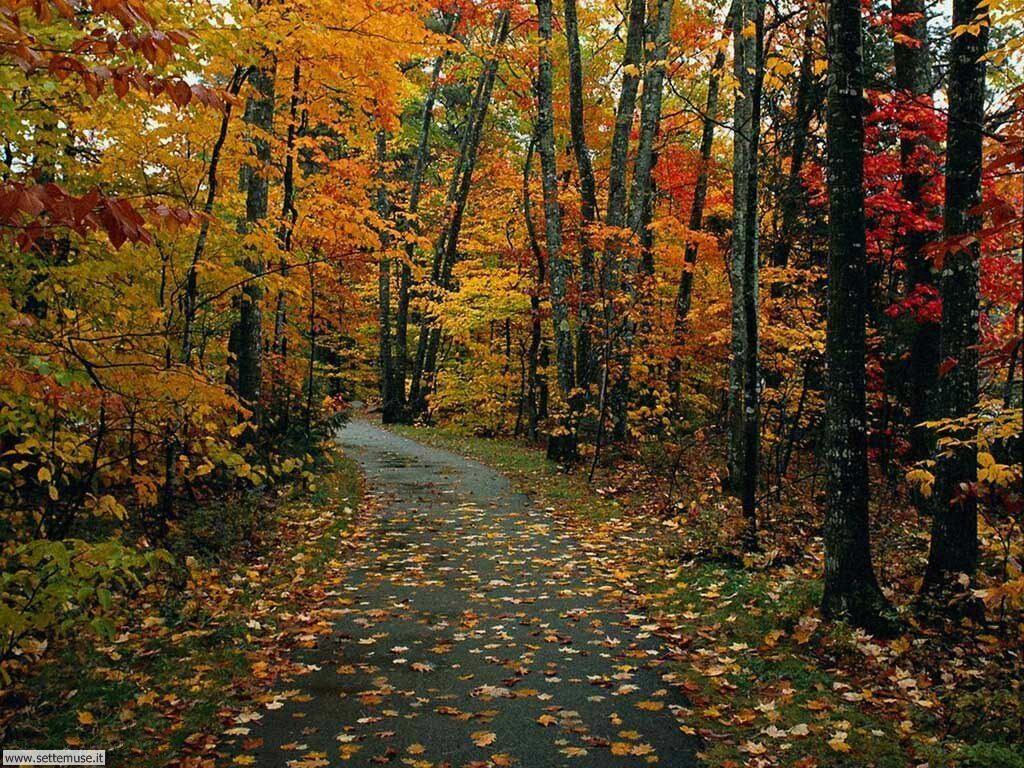 Foto desktop di boschi e foreste 083